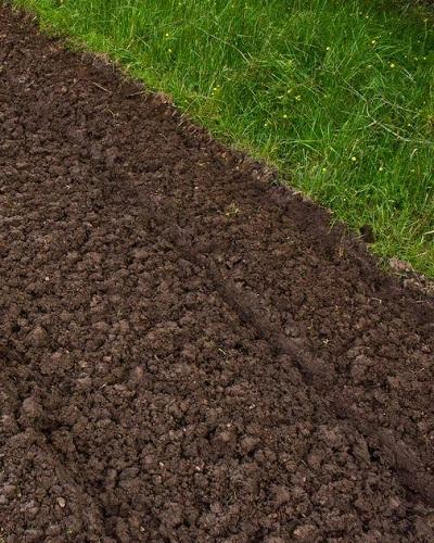 خاک مناسب کاشت مرزه