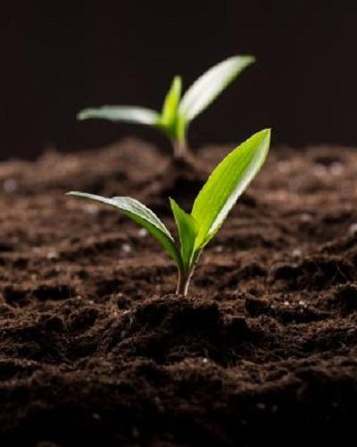 تفاله قهوه برای گیاهان