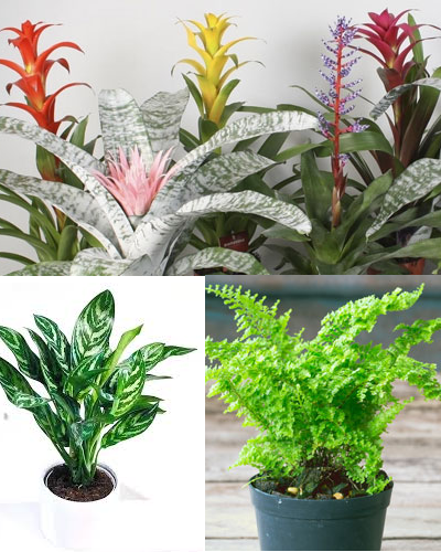 گیاهان مناسب برای آشپزخانه و حمام