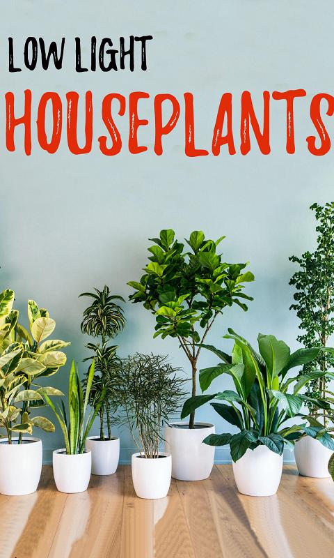 گیاهان سایه دوست
