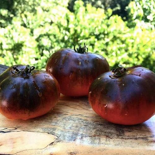گوجه فرنگی بلک بیوتی