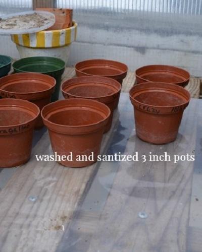 گلدان مناسب برای کاشت شمعدانی