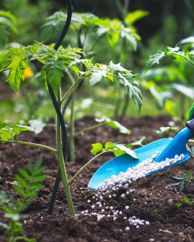 استفاده از کود برای گیاهان