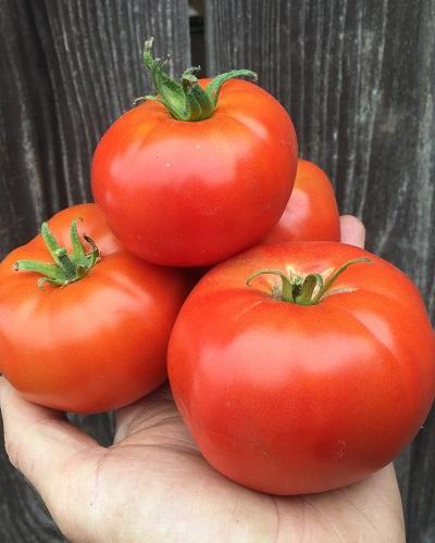 گوجه فرنگی مسکویچ