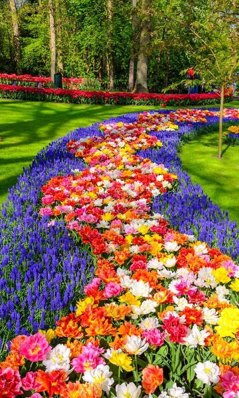 طراحی باغچه گل