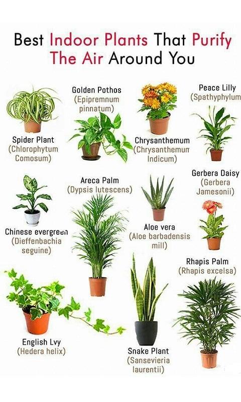 گیاهان آپارتمانی راحت