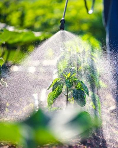 عملکرد فسفیت در گیاهان