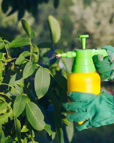 درست کردن صابون حشره کش ارگانیک