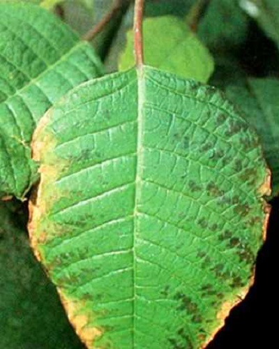 نقش پتاسیم در رشد گیاه