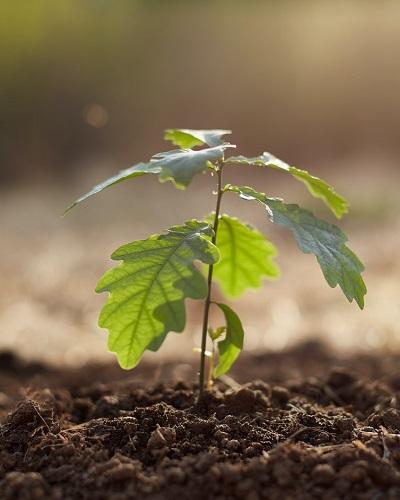 نقش فسفر در رشد گیاه