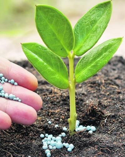 نقش مواد غذایی در رشد گیاه
