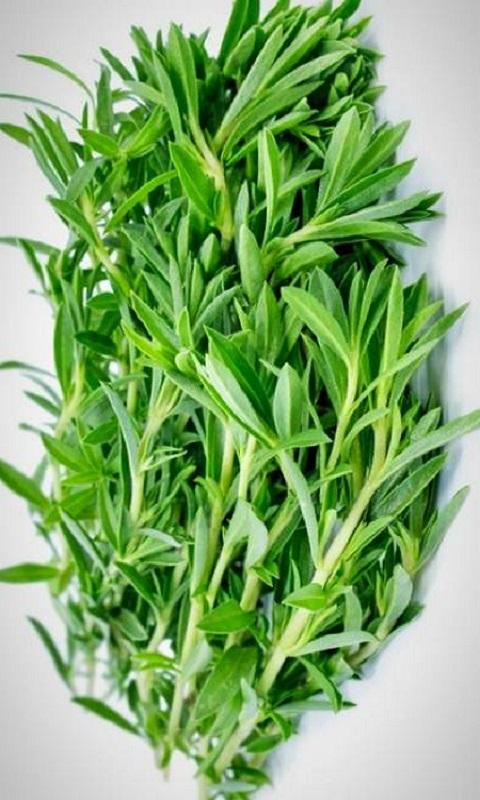 گیاه مرزه
