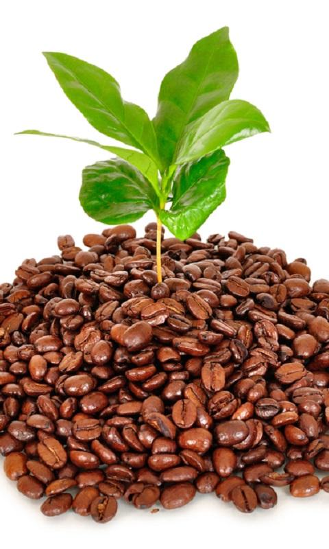 فواید قهوه برای گیاهان