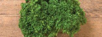 بذر جعفری دارکی