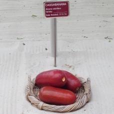 بذر خیار مشک