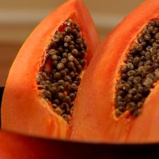 بذر پاپایا نارنجی پاکوتاه