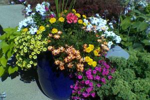 کشت و مواظبت گل ها و گیاهان یکساله