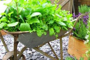 چند ایده الهام بخش برای پرورش سبزیجات در خانه