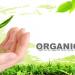 چگونگی درست کردن آفت کش های ارگانیک