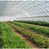میوه ها و سبزیجات محبوب برای رشد در گلخانه