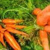 آموزش کاشت هویج