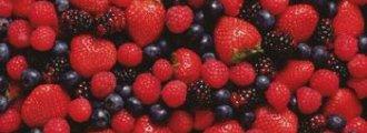 پرورش بوته های میوه در گلخانه