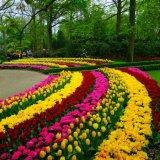 طراحی گلکاری باغچه