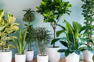 گیاهان آپارتمانی مقاوم به کم نوری