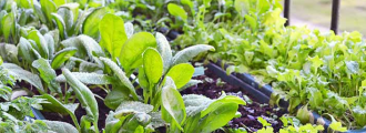 پرورش سبزیجات در آشپزخانه