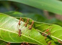 از بین بردن مورچه در خاک باغچه