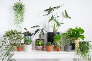ده گیاه برتر آپارتمانی
