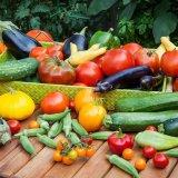 در تابستان چه محصولی بکاریم؟