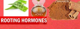 هورمونهای ریشه زایی طبیعی