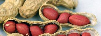 بذر بادام زمینی قرمز