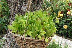 کاشت میوه و سبزیجات در سبد