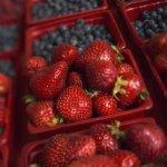 کاشت بلوبری و توت فرنگی در گلدان