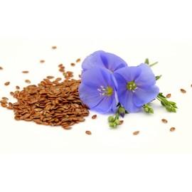 بذر گل فلکس یا کتان