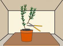قلمه زدن گیاهان  تصویری