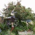 زمان سمپاشی درختان میوه