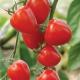 بذر گوجهفرنگی توتفرنگی F1