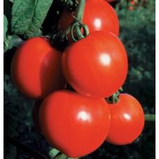 بذر گوجه فرنگی دختر جدید F1 ارگانیک