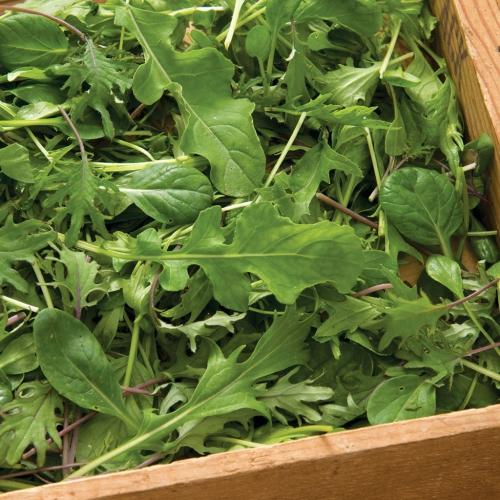 بذر سبزی های میکس