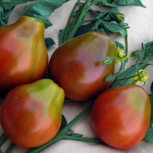 بذر گوجه فرنگی سیاه ژاپنی