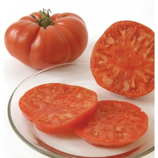 بذر گوجه فرنگی برندیواین ارگانیک