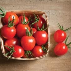 بذر گوجه فرنگی گیلاسی بمب ارگانیک (F1)