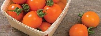 بذر گوجه فرنگی کلمانتین ارگانیک (F1)