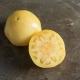 بذر گوجه فرنگی سفید بزرگ ارگانیک