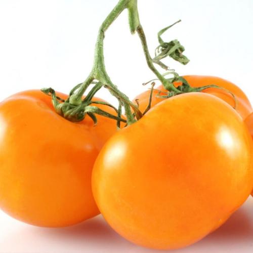 بذر گوجه فرنگی والنسیا ارگانیک