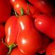 بذر گوجه فرنگی گلابی قرمز