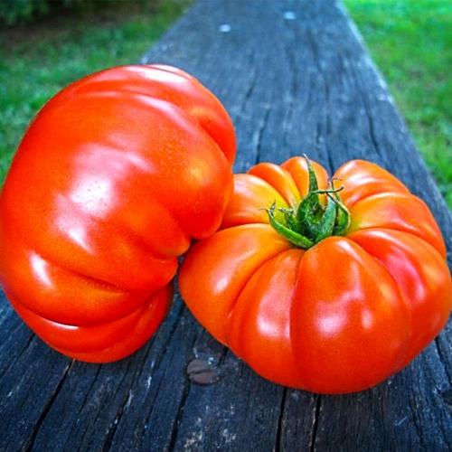 بذر گوجه فرنگی مارماندی